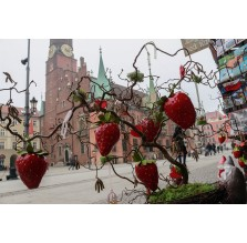 "Fotografia Wrocław ""Ratusz zza truskawek"""