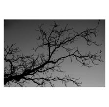 """Fotografia natury """"Gałąź"""""""
