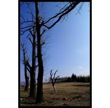 """Fotografia natury """"Widok z drzewami"""""""
